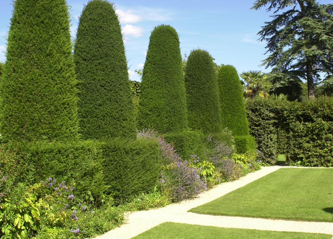 Trees & Hedges in Cornwall and Devon